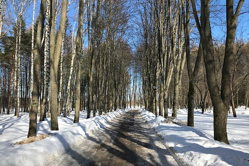 Экологическая деревообработка в России – это вообще реально?
