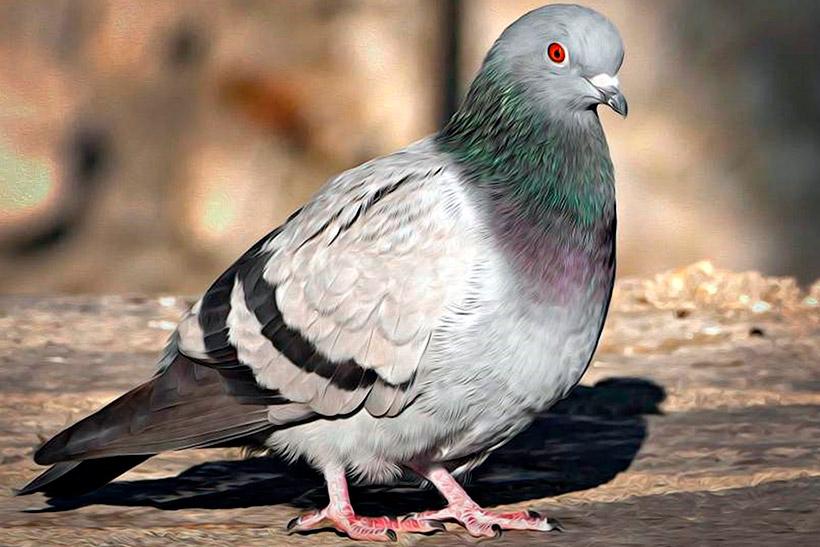 Москвичи сообщили о массовой гибели голубей на улицах города