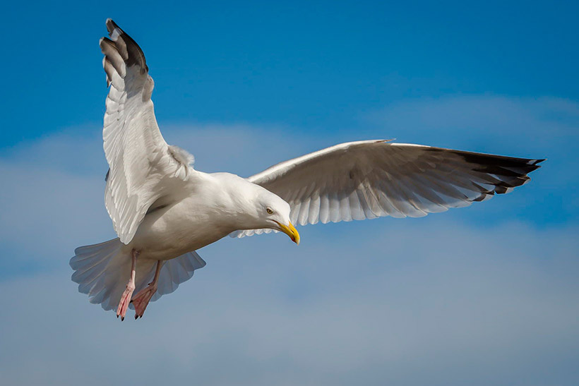 Птичий помет нормализует климат Земли