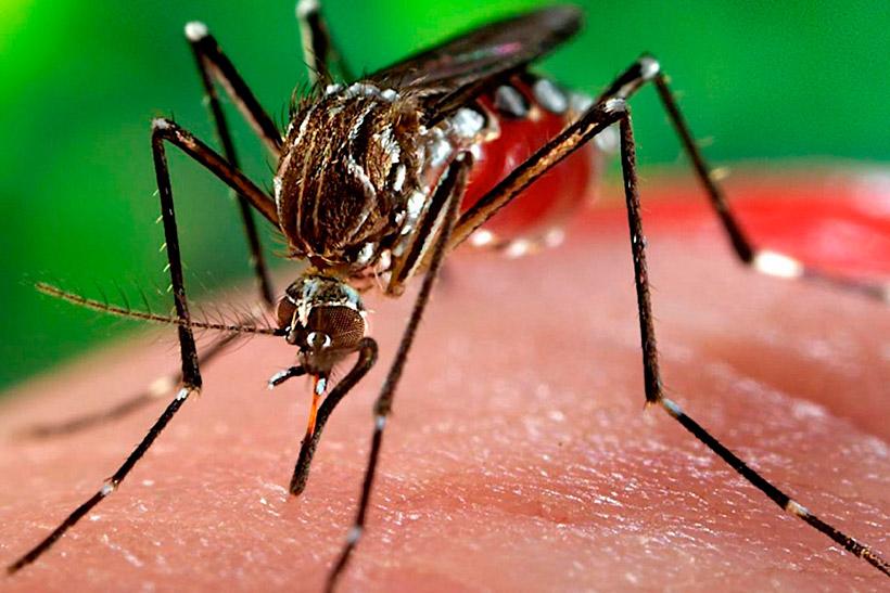 В этом году Москва может спокойней пройти период комариного пика