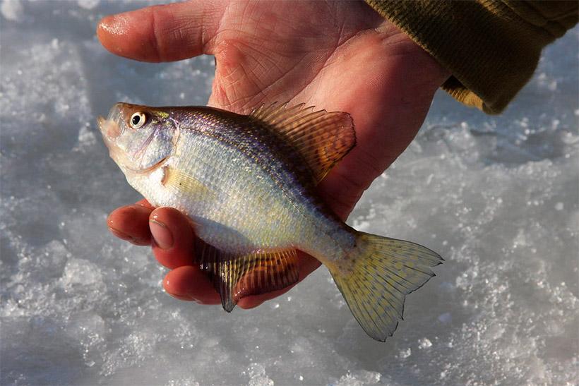 На Гребном канале можно будет рыбачить