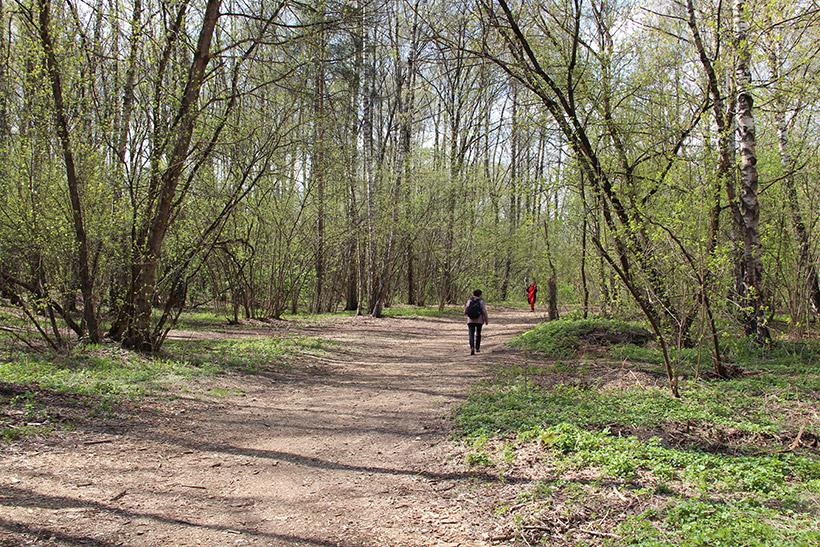 Начало пути в Ашан через Крылатский лес
