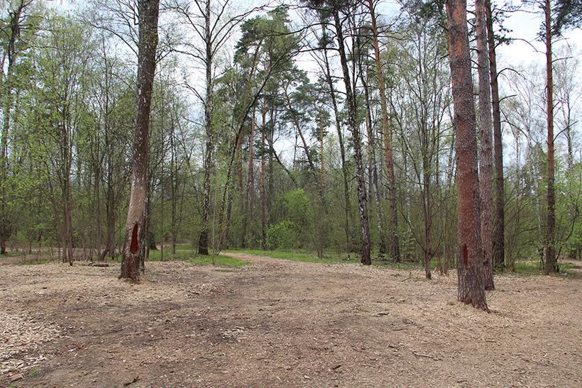 Полянка в Крылатском лесу