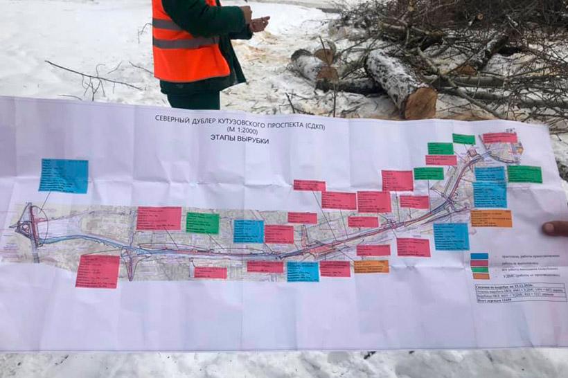 Этапы вырубки деревьев в рамках строительства СДКП
