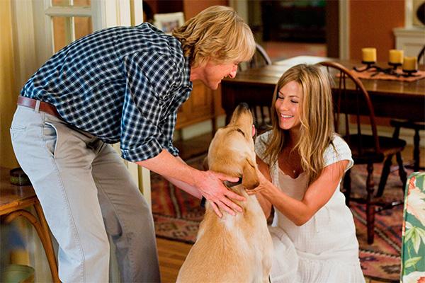 Как стать хозяином воспитанной собаки