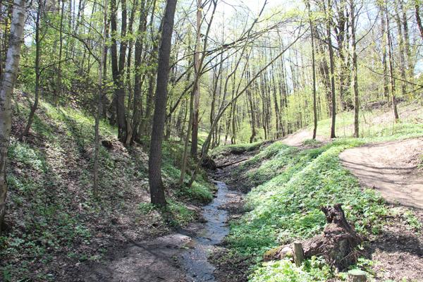 Ручьи в парке Фили