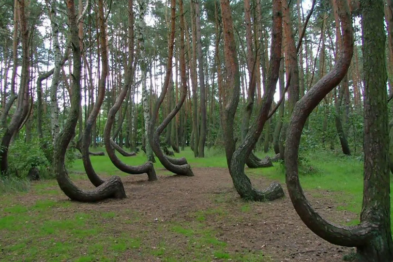 Лес в Румынии