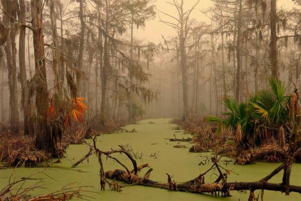 Шесть самых страшных лесов на Земле